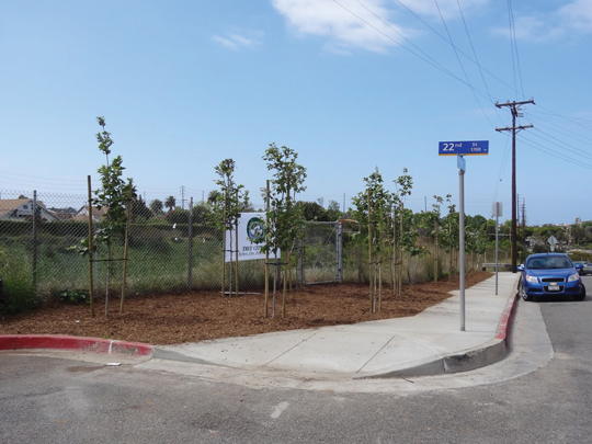 After: Eagle Scout planted 19 California Sycamores (Platanus racamosa) to green the space.