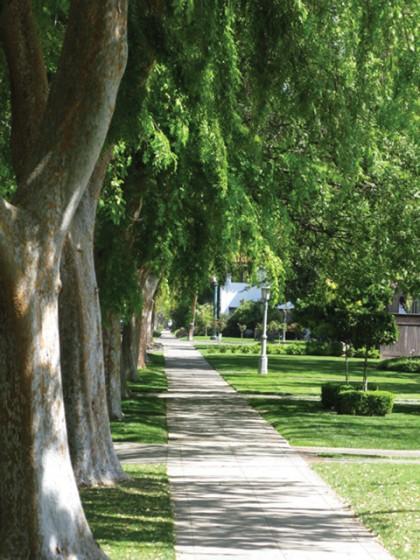 Fresno Street Trees