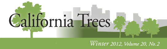 California Trees Winter 2012