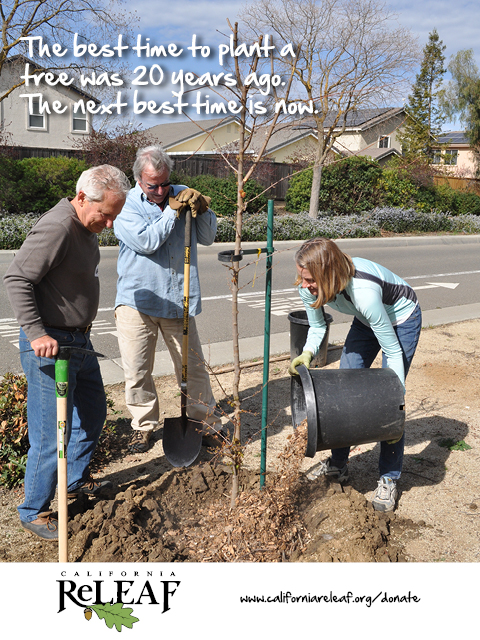 The best time to plant a tree is now.