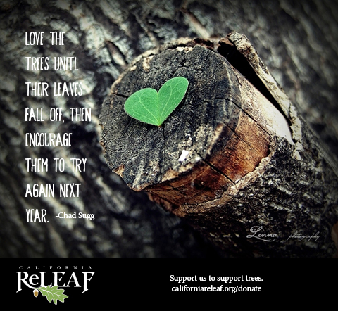 Give your trees some love.