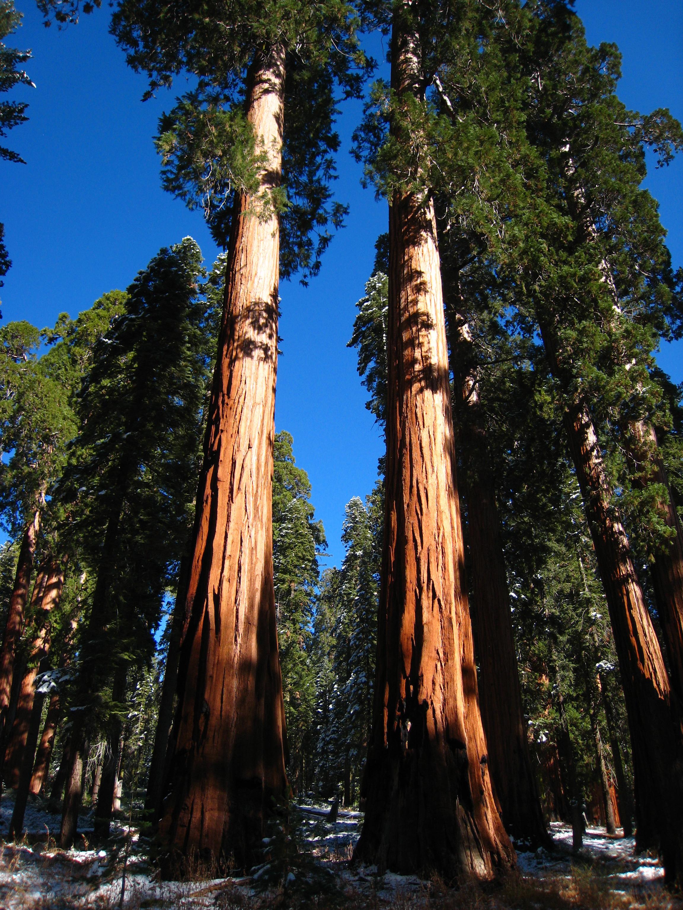 My Favorite Trees Joe Liszewski California Releaf
