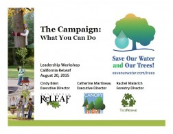 The Campaign: What you can do? Leadership Workshop.