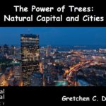 The Power of Trees: Natural Capital and Cities.