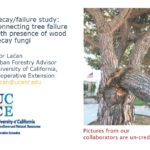 Decay/ failure study: Connecting tree failure with presence of wood secay fungi.