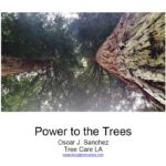 Power to the Trees.