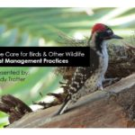 Tree care for birds and other wildlife: best management practices.